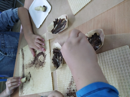 Czekoladowe grzyby- na pewno jadalne