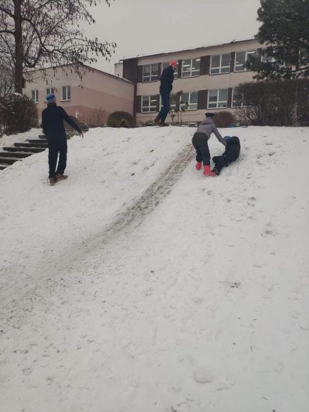 Zimowe harce świetlików